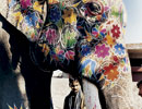 An elephant painted for a wedding ceremony in India.
